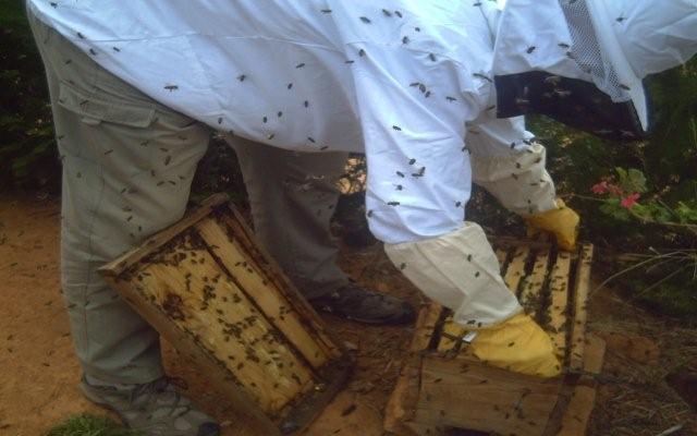 apiculture6.jpg