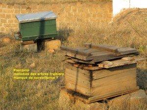 Les ruches de Fr René dans apiculture vakoa-191-300x225